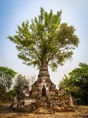 stock photo of shan  - Ancient pagoda with tree growing out of it in Little Bagan Hsipaw Shan State Myanmar  - JPG
