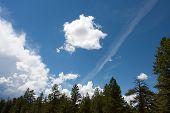 Ponderosa Clouds
