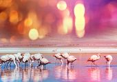 stock photo of flamingo  - Pink flamingos - JPG