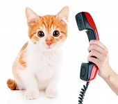 Little kitten with telephone receiver isolated on white