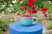 Fresh Sweet Raspberry In Blue Ceramic Cup On Wooden Trunk