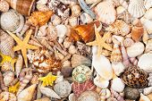 Background Made Of Sea Shells