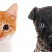 stock photo of puss  - Cute cat and dog faces isolated on white - JPG
