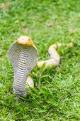 pic of garden snake  - The Statue Of The Snake In Garden  - JPG