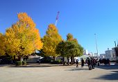 Tokyo, Japan - November 22, 2013: Visitors Enjoy Colorful Trees On November22, 2013 In Ueno Park