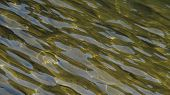foto of oblique  - photo of the water surface taken obliquely - JPG