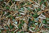 Bamboo Caterpillar Or Express Worm Fried