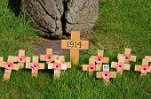 Memorial poppies on crosses.
