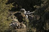 stock photo of sniper  - Sniper with ghillie waiting for target in an Airsoft party - JPG