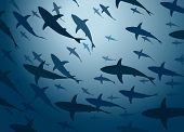 Illustration of a large school of cruising sharks from below