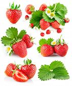 Set berry strawberry with leaves and flowers. Isolated on white background