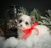 stock photo of christmas puppy  - Very cute puppy sitting in snow with a lantern and Christmas lights around her - JPG