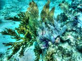 Coral plants undulate in Palancar Reef