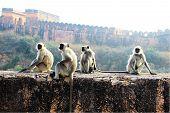 Monkeys On The Wall