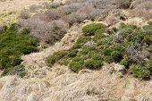 pic of plateau  - Plateau landscape of Witse - JPG