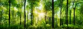 Forest Panorama With Rays Of Sunlight poster