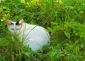 image of kitty  - White kitty sitting and hiding in the grass - JPG
