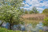 foto of wetland  - Spring blossoms overlooking the wetlands in this wildlife refuge in Tinicum Pennsylvania - JPG