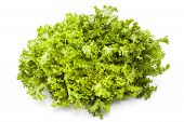 stock photo of escarole  - Escarole on white background Nutritious and healthy food - JPG