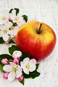 picture of apple blossom  - apple and apple tree blossoms on a wooden background - JPG