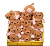 image of trouble-maker  - a group of soft toy puppies in a bin with the trouble maker faceing the wrong way - JPG