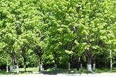 The Tree At Bright Solar Day.