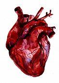 ������, ������: Aquarelle Human Red blood Heart