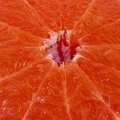 Close-up Pink Grapefruit