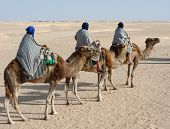 Tourists On Camels poster