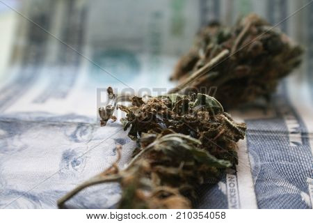 Cannabis Buds On