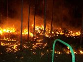 picture of collier  - Jar Head Fire May 2011 Collier County Everglades - JPG
