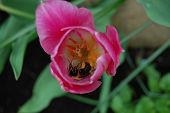 Pollen Protection