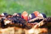 Fried Meat, Tomatoes And Eggplant On The Skewer During Cooking On The Grill. Photo Close-up, Focus O poster