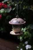 Small wild bird feeder. Finch and Sparrow bird feeder. Bird Seed. Bird Food. poster