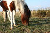 Feeding Pony