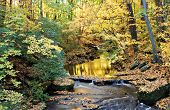 Fall Scene Colorful