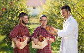 Agronomist And Farmers In Apple Orchard poster