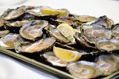 Appetizer Oysters