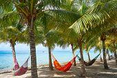 Cozumel island beach palm tree hammocks in Riviera Maya of Mexico poster
