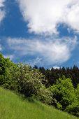 picture of banska  - Spring landscape  - JPG