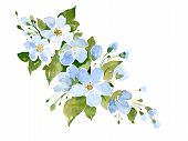 Apple Tree Flowers. Watercolor Hand Painted Illustration. Design Elements For Women, Floral Patterns poster