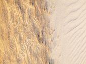 Beach Sand Background. Sand Texture. Brown Sand. Background From Fine Sand. Sand Background poster
