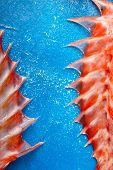Sebastes Or Red Sea Bass Fins On Blue Background poster