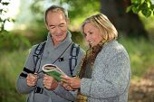 Couple reading a map in a forest