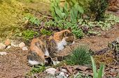 Adult Domestic Cat Sitting In Grass. Cat In The Summer Garden poster