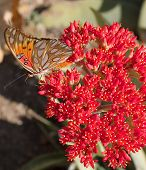 Buterfly On Red Flower