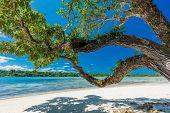 Vibrant Palm trees on a tropical beach, Vanuatu, Erakor Island, Efate poster