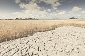 Dry And Arid Land With Failed Crops Due To Climate Change And Global Warming. High Temperatures Heat poster