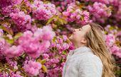 Girl Enjoying Floral Aroma. Kid On Pink Flowers Of Sakura Tree Background. Botany Concept. Kid Enjoy poster