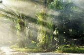 Palm Light Farm Day Outdoor Fog